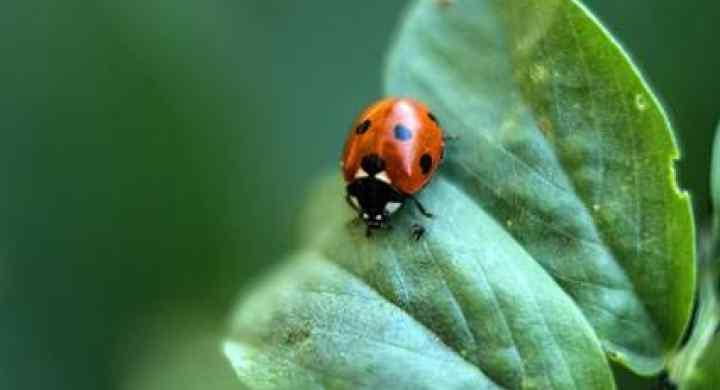 Fauna agricultura ecológica